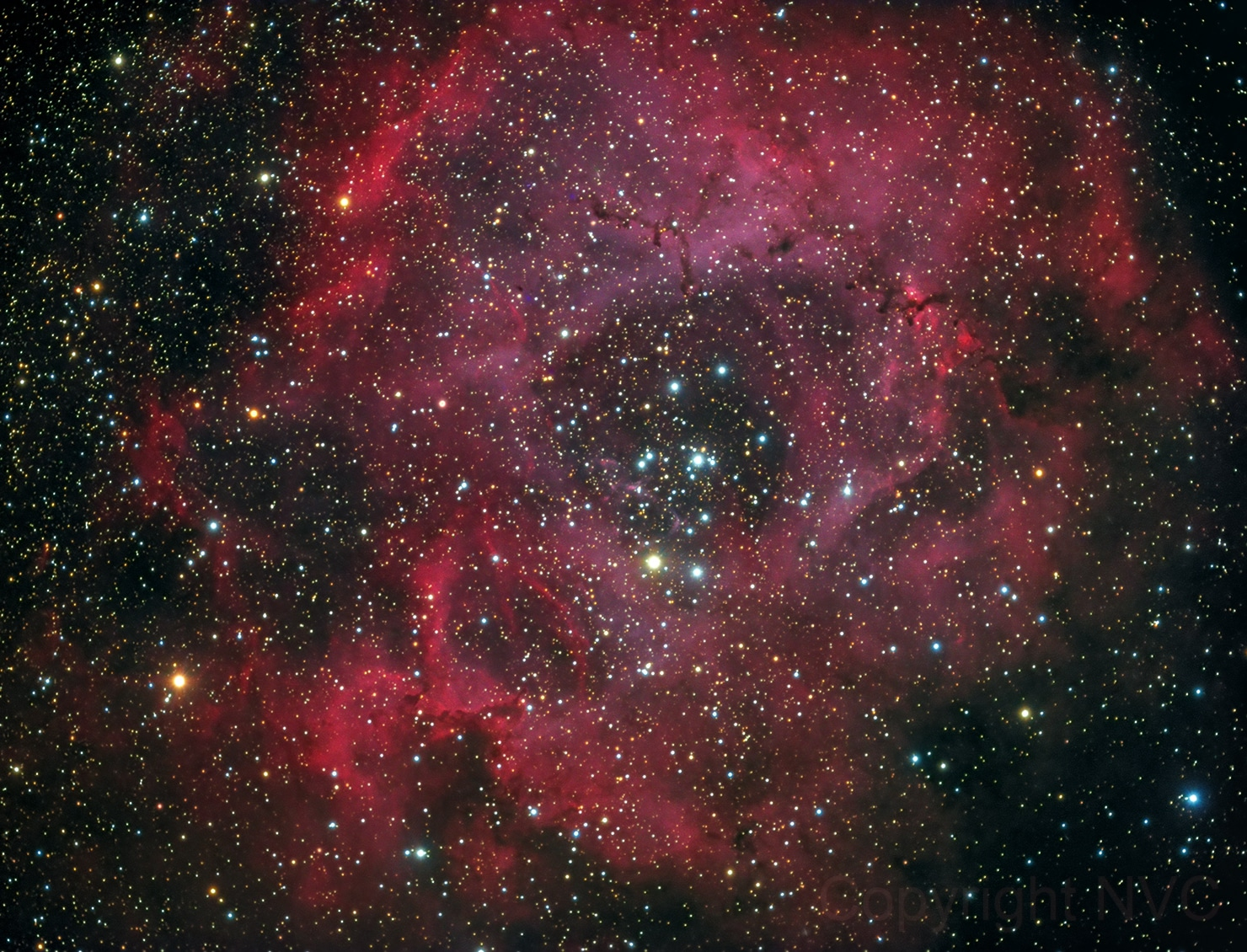 Rosette Nebula NP127is
